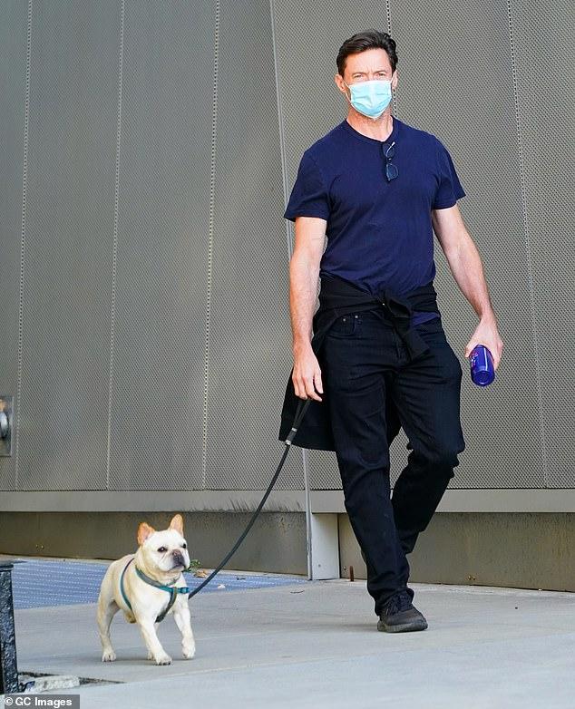 Hugh Jackman enjoys a stroll with his French bulldog Dali near his New York City home 6