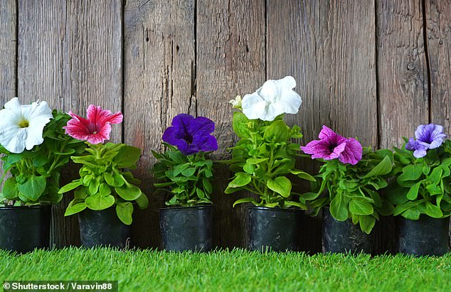 Mental Health: Adding ornamental plants to your front garden can help you feel happier 2