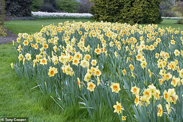 Bring spring home early:Plant bulbs and their companions now to banish winter blues 1