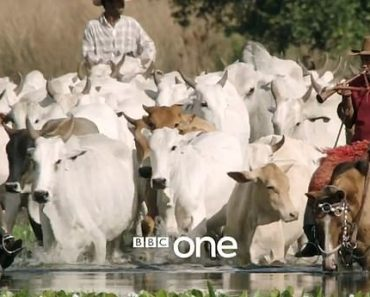 Farmers force BBC to remove 'biased' show about meat production from iPlayer  2