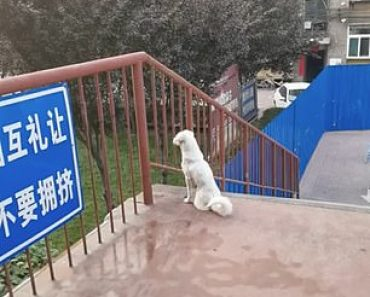 Dog friendship: Canine friends won't stop waiting for each other at two sides of a university 5