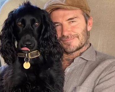 Victoria Beckham enjoys low-key weekend with husband David and daughter Harper 17