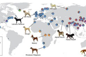 Ice Age ended 11,000 years ago with at least five dog breeds 7